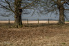 Chestnut Trees (ARTUS8) Tags: flickr baum landschaft nikond800 nikon50mmf18 feld landscape field