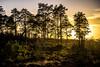 Tree Shadows (Foto_Art_) Tags: nikon d610 2485mm sun shadows cast sunset evening uk british heathland countryside