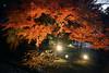 夜楓 (aelx911) Tags: a7rii a7r2 sony gmaster fe2470mmf28gm fe2470gm fe2470 landscape autumn fall maple leaf night japan kyushu fukuoka dazaifu tenmangu 日本 九州 太宰府 天滿宮