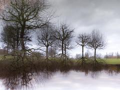 Pour une baignade hivernale (Clydomatic) Tags: arbres eau ciel trees reflet réflection pré hiver winter inondation
