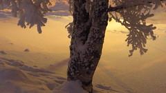 IMG_4352 (Mr Thinktank) Tags: raureif frost
