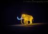 Niagara Falls Lights  (Elephant) (13skies) Tags: festivaloflights niagara niagarafallson lights displayed fun family nighttime nightshot sonya57 travel tourism elephant tusks