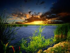 Shoreline 11 (mrbillt6) Tags: landscape rural prairie waters lake pond shore weeds rocks sky grass outdoors country countryside northdakota