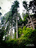DSC_1625bw (Roelofs fotografie) Tags: wilfred roelofs nikon d5600 2017 rock old luxemburg mullerthal green woods adobe fotgrafie outdoor tree wood landscape air nature sky big plant walk