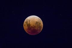 Blood Moon (marc_odonoghue) Tags: hawkes bay newzealand nz moon eclipse