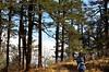 a long way down (eyenamic) Tags: forest tree wood grass people trail path trek treeking himalayas sandakphutrek sandakphu trekkers nikon d5100