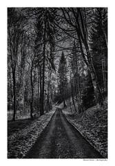 Hunters Highway (Der Zeit die Augenblicke stehlen) Tags: waldweg thomas hesse hth56