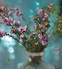 Just living is not enough. One must have sunshine, freedom, and a little flower. (Zara Calista) Tags: flower quote pink nikon vase stilllife dream bokeh green turquoise teal blue soft blur depthoffield dof macro
