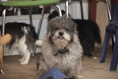 After milk (vuongnam86) Tags: dogs bibi
