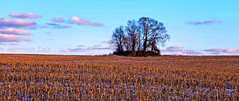 Land in Sight! (Wide Angle) (a2roland) Tags: normanzeba2rolandyahoocoma2roland land sight site patch fields corn blue orange tint reddish sky clouds landscape nature bushes landmass silhouette trees wide angle