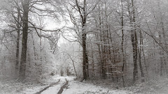Winter Path (Thos A.) Tags: snow winter forest path wood trees white cold neige hiver forêt chemin bois arbres nature natur canon eos eos80d 80d sigma bourgogne burgundy nièvre