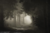ᴇʀɪᴇᴇ (der_peste) Tags: gloomy obscure sinister sombre sombrescape forest raysoflight darkness eerie lurky murky scary creepy unearthy walkway path light shades shadow