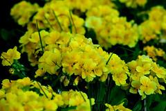 Botanical Gardens 73 (TheseusPhoto) Tags: flower plant bloom colors nature naturephotography beautyinnature macro garden cluster