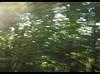 La Vapeur du Trieux (philippe.ducloux) Tags: france côtesdarmor bretagne brittany canon 450d canon450d strictlygeotagged flickraward mywinners lavapeurdutrieux train vapeur trieux paimpol pontrieux arbre vitesse mouvement