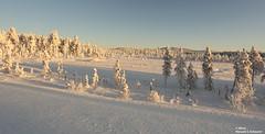 (alpros) Tags: finland finnland suomi northerneurope nordeuropa ivalo avvil inarikommun inarimunicipality veskoniemi lapland lappland bezirkinari snow schnee snö vinter winter