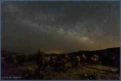 Cholla and Stars 7511 (maguire33@verizon.net) Tags: cactus california joshuatreenationalpark lll milkyway cholla galaxy lightpollution stars unitedstates us coloradodesert