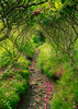 Green Tunnels (farbernathan) Tags: nc tn highlands mountains roanmountain summer outside landscape rhododendrons flowers green blueridgemountains trail appalachiantrail fine art outdoors spring heaven