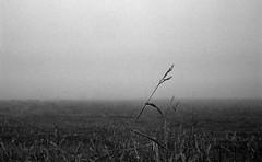 Last blade of grass (Rosenthal Photography) Tags: dezember nebel herbst bnw schwarzweiss anderlingen 35mm natur asa400 20171202 ff135 winter gras landschaft städte feld ilfordhp5 bw olympus35rd analog rodinal150 dörfer siedlungen landscape autumn december mood fog mist nature fields olympus olympus35 blackandwhite 35rd fzuiko zuiko 40mm f17 ilford hp5 hp5plus rodinal 150 epson v800