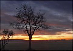 Nature`s Best..... (kurtwolf303) Tags: austria österreich burgenland sunset sundown trees bäume sky clouds nikoncoolpixs9900 nikon compactcamera landscape dark dunkel unlimitedphotos silhouettes dusk natur nature horizont horizon topf25 250v10f topf50 topf75