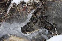 Empreinte de glace (ZUHMHA) Tags: villaudemard france neige snow hiver winter nature montagne mountain macro matière texture cristaux glace gel ice line lignes courbes curve geometry géométrie form formes