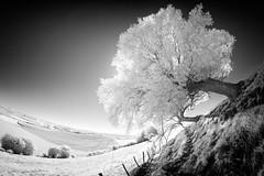 Variation autour d'un arbre #4