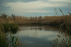 (fcojavier1991) Tags: andalucía atardecer nikond3300 d3300 nikon spain españa nature naturaleza almería aguadulce