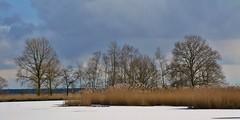 Smitsveen - Dwingelderveld (henkmulder887) Tags: dwingelderveld npdwingelderveld drenthe natuurmonumenten sbb staatsbosbeheer ven smitsveen winter ijs wit natuur natur nature natura