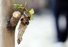 Oruga (carmengarridoflores) Tags: gusano mariposa
