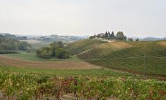 IMG_2184 (kevindalb) Tags: italia italy italie 2017 piemonte monferrato cloudy hills colline vigneti vignobles vineyard