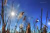 naturale fantasia (pamo67) Tags: pamo67 naturalfantasy fili wires canne canes controluce backlight grass cielo sky blu lacustre lacustrine flare pasqualemozzillo