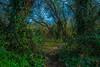 Puente Arce (sdiegodejuan) Tags: bosques nikon arbol foto verdes fotografia composicion nature naturaleza free hierba cantabria arce paisaje spain españa puentearce