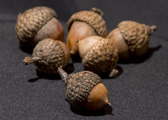 intentions (Ogedn) Tags: acorns tree seed still life