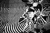 13H1681 (Toonfish 67) Tags: london londoncity nikond700 nikon d700 streetphotography blackwhite underground camdentown camdenlock saintpancras towerbridge londoneye toweroflondon