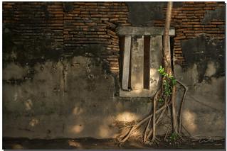 Banyan Tree & Window,  Tainan, Taiwan
