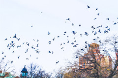 (molly31203) Tags: new york nyc city canon scenery travel canon700d 700d sky birds bird building blue loneliness lonely scerenity peaceful quiet