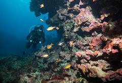 Cardinalfish cave (Marine Explorer) Tags: scuba nature marine underwater australia marineexplorer