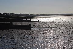 IMG_6908 (cindyincidentally) Tags: whitstable kent kentcoast britishbeach seaside seashore seasidetown