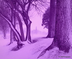 Snowscene (Rollingstone1) Tags: levengrovepark dumbarton scotland snow scene trees bark winter storm nature art artwork landscape view colour vivid lilac pink
