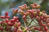 greetings from the japanese garden (eva.pave) Tags: fruit tree branch red nature dof bokeh garden japanese
