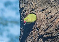 keoldeo-bharatpur-bird-sanctuary-1-3 (92) (jjamwal) Tags: birds birdwatching travel tamron nikon wildlife nature animals india
