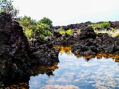 Hawaii-LonePalm-39.jpg (Chris Finch Photography) Tags: shoreline sunset kohala volcano chrisfinchphotography blacksandbeach ʻanaehoʻomalubay goldcoast landcapes landscape waikoloa sunsets pacificocean abay hawaiianphotography hawaii kohalacoast kiholobay landscapephotographs hawaiiphotography keawaikibay landscapephotographer beach ocean utahphotographer wwwchrisfinchphotographycom chrisfinch volcanoes shore lonepalm lone landscapephotography coast pacific bigisland