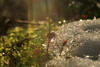 Sun's Flare (Mate´s Photos) Tags: sun lensflare makro macro raindrop forest reflections bokeh ice snow winter leafes