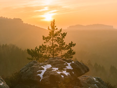The Sunset Pine Tree (redfurwolf) Tags: saxonswitzerland nationalpark germany saxony sunset tree pinetree rock winter pfaffenstein sun forest sky awesome epic orange clouds colorful nature outdoor ngc naturalreserve landscape redfurwolf sonyalpha a99ii sal2470f28za sony sonydeutschland