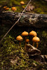 Mushrooms (*Ranger*) Tags: nikond3300 outdoors winter fungus mushroom