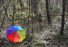 The Rule of Thirds with an Umbrella -:- 7664 (buddhadog) Tags: rainbowumbrella ruleofthirds trees pregamewin sweeper gamewin 100vu agcgsweepwinner 4sweeps ccc 500vu challengeyouwinner friendlychallenges 1000vu 1000 6wins cccsweep agcgmegachallengewinner