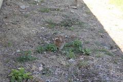 IMG_3900 (19ouch83) Tags: sylvilagus trasimeno umbria coniglio