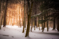 Happy Accident (Augmented Reality Images (Getty Contributor)) Tags: woodland leaves perthshire landscape winter scotland nature nisifilters light trees sunshine canon countryside forest snow forgandenny unitedkingdom gb