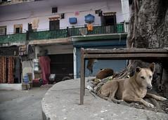 Delhi 2017 (Blinkofanaye) Tags: sujan singh park khan market delhi new mechanic dog mattress auto old buildings 2017 sujansinghpark