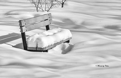Benched (Canon Queen Rocks (2,082,000 + views)) Tags: seat bench snow park blackandwhite winter shadows momentsbycelinecom pearseestate calgary alberta monochrome