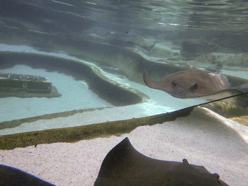 Sea World Stingray Tank
